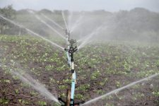 irrigation-588941_1920